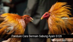 Panduan Cara Bermain Sabung Ayam S128
